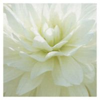 Masterpiece Art Gallery White Blossom I 20-Inch x 20-Inch Canvas Wall Art