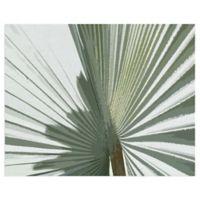 Masterpiece Art Gallery Palms Frond II 16-Inch x 20-Inch Canvas Wall Art
