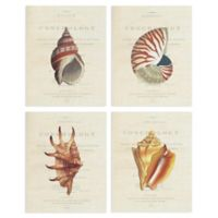 Masterpiece Art Gallery Buccinum Nautilus Lambis Conchology 11-Inch x 14-Inch Canvas Wall Art