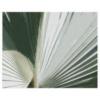 Masterpiece Art Gallery Palms Frond I Crop 16-Inch x 20-Inch Canvas Wall Art