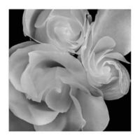 Floral & Botanical 20-Inch Wrapped Canvas Wall Art