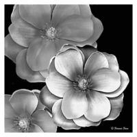 Frannie Funn Magnolia 20-Inch x 20-Inch Canvas Wall Art
