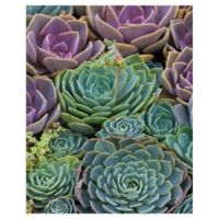 Robin Constable Hanson 24-Inch x 18-Inch Succulent Gemstones Wrapped Canvas Wall Art