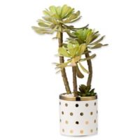 A&B Home Artificial Potted Succulent in Dotted Planter