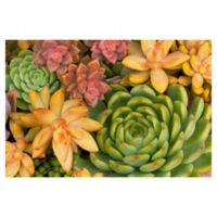 Desert Colors Hanson 36-Inch x 24-Inch Wrapped Canvas Wall Art