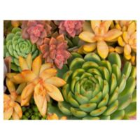 Desert Colors Hanson 40-Inch x 30-Inch Wrapped Canvas Wall Art