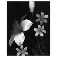 Frannie Funn Two Lilies 16-Inch x 20-Inch Wrapped Canvas Wall Art