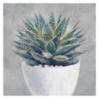 Michael Faragher Potted Succulent I 20-Inch x 20-Inch Canvas Wall Art