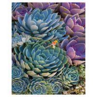 Robin Constable Hanson Succulent 20-Inch x 16-Inch Wrapped Canvas Wall Art