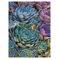 Robin Constable Hanson Succulent 24-Inch x 18-Inch Wrapped Canvas Wall Art