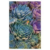 Robin Constable Hanson Succulent 36-Inch x 24-Inch Wrapped Canvas Wall Art