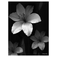 Lilies Three 18-Inch x 24-Inch Wrapped Canvas Wall Art