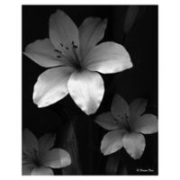 Lilies Three 22-Inch x 28-Inch Wrapped Canvas Wall Art