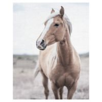 Western Blonde Horse 22-Inch x 28-Inch Wrapped Canvas Wall Art
