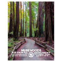 Masterpiece Art Gallery Muir Woods 22-Inch x 28-Inch Canvas Wall Art