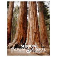 Masterpiece Art Gallery Sequoia 22-Inch x 28-Inch Canvas Wall Art