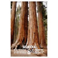 Masterpiece Art Gallery Sequoia 24-Inch x 36-Inch Canvas Wall Art