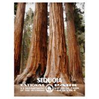 Masterpiece Art Gallery Sequoia 30-Inch x 40-Inch Canvas Wall Art