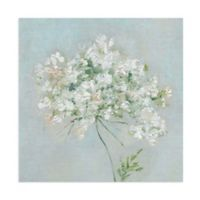 Sally Swatland 24-Inch x 24-Inch Floral & Botanical Wrapped Canvas Wall Art