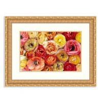 Amanti Art Buttercup Flowers 30-Inch x 23-Inch Framed Art Print