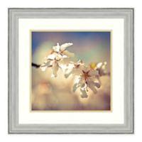 Amanti Art Soft Bloom I by Assaf Frank 22-Inch Square Framed Art Print
