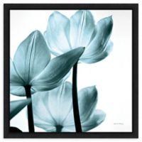 Amanti Art Translucent Tulips III Sq Aqua Crop 16-Inch Square Framed Canvas Wall Art