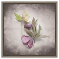 Amanti Art Vintage Hellebore Study VII 16-Inch Square Framed Canvas Wall Art