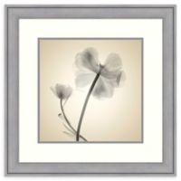 Amanti Art® Judy Stalus Flowers 23.38-Inch Square Acrylic Framed Print in Grey