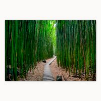 Christopher Knight Collection Bamboo Path 27-Inch x 36-Inch Canvas Wall Art