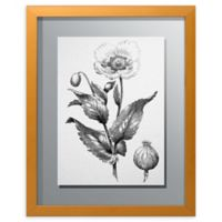PTM Images Herbarium 15.5-Inch x 19.5-Inch Framed Wall Art