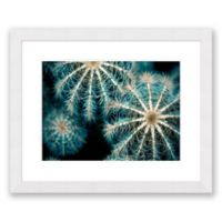 Sea Urchins 31.5-Inch x 25.5-Inch Paper Framed Print Wall Art