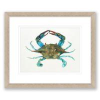 Blue Crab 20-Inch x 24-Inch Framed Print Wall Art