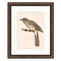 Bird 18.5-Inch x 22.5-Inch Paper Framed Print