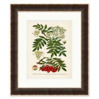 Plant Study I 24-Inch x 28-Inch Framed Print Wall Art