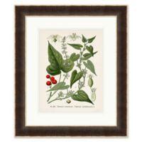 Plant Study II 24-Inch x 28-Inch Framed Print Wall Art