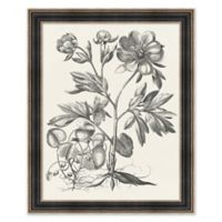 Floral Etching 1 32.25-Inch x 26.25-Inch Framed Print Wall Art in Black/White