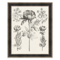 Floral Etching 2 32.25-Inch x 26.25-Inch Framed Print Wall Art in Black/White