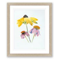 Echinacea and Black Eyed Susan 20-Inch x 24-Inch Framed Wall Art