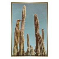 PTM Images Cactus Bulb 33.75-Inch x 49.75-Inch Framed Canvas Wall Art in Gold