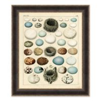 Bird Egg Chart 35.5-Inch x 41.5-Inch Framed Print Wall Art