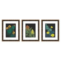 Cacti 18.75-Inch x 22.75-Inch Paper Framed Print Set of 3