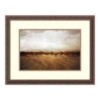 Amanti Art The Olive Grove 27-Inch x 21-Inch Framed Print