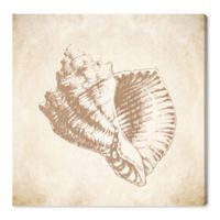 Oliver Gal™ Sea Shell 12-Inch Square Canvas Wall Art in Beige