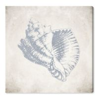 Oliver Gal™ Sea Shell 16-Inch Square Canvas Wall Art
