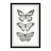 """Marmont Hill Butterfly Trio II 8"""" x 12"""" Framed Print"""