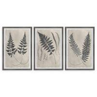 Marmont Hill Vintage Fern Study II 24-Inch x 12-Inch Framed Wall Art Set