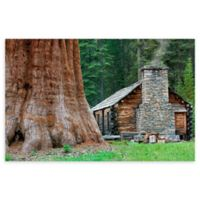 Christopher Knight Collection® Giant Sequoia Redwoods 36-Inch x 54-Inch Canvas Wall Art