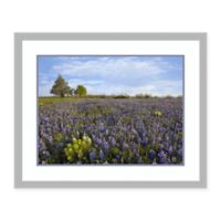 Amanti Art® Tim Fitzharris Floral Photography 31.75-Inch x 25.75-Inch Acrylic Framed Print in Bl