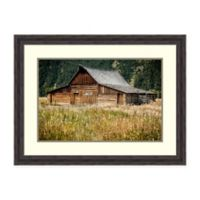 Amanti Art® Tim Oldford Nature Photography 33.38-Inch x 25.38-Inch Acrylic Framed Print in Brown