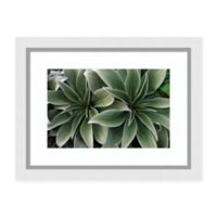 Amanti Art® Tui De Roy Floral Photography 30-Inch x 23-Inch Acrylic Framed Print in Green/grey